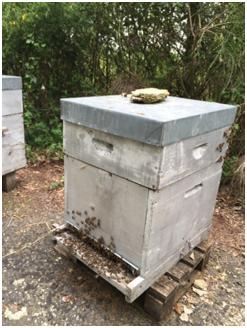 La ruche et la hausse